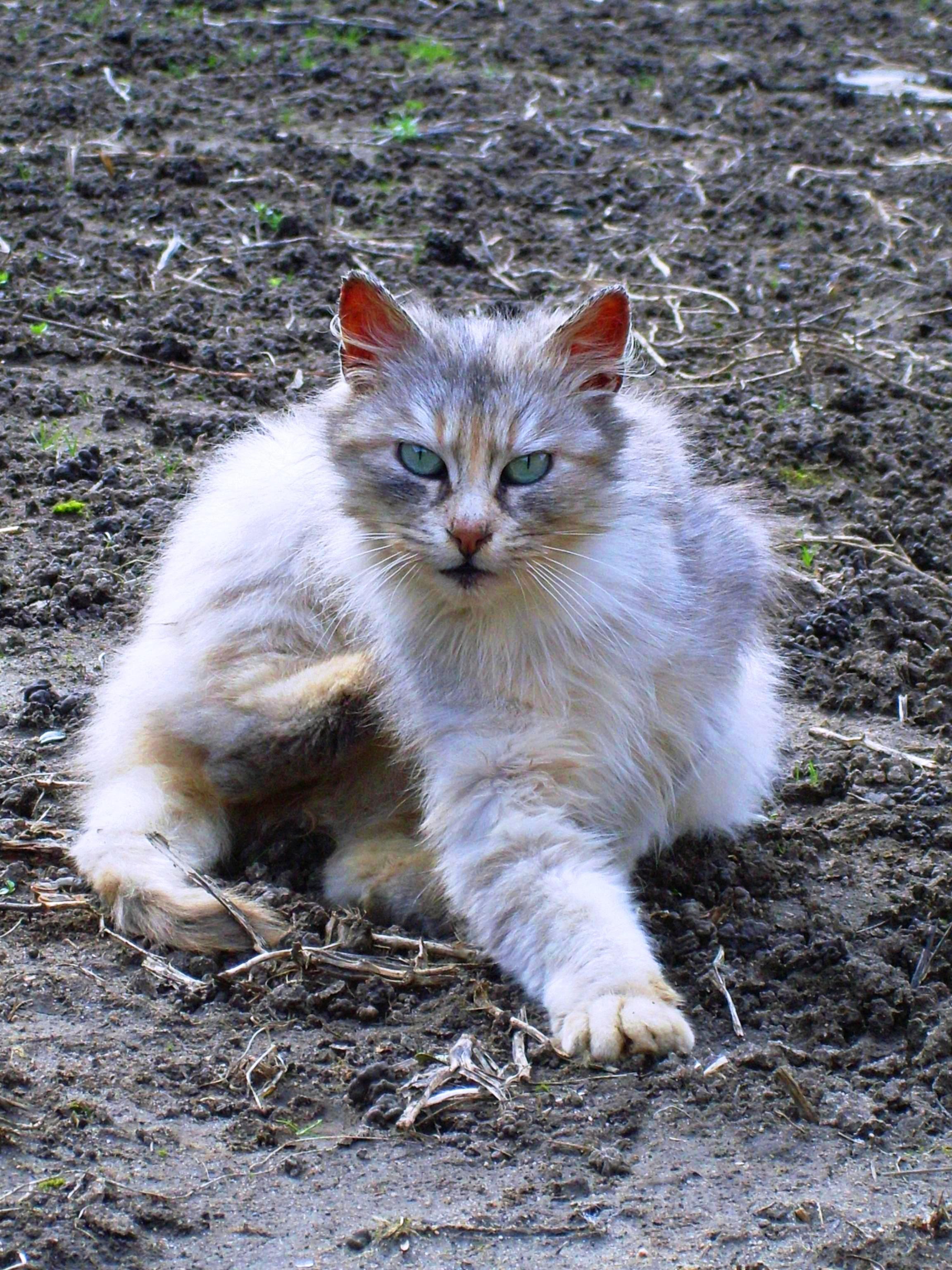 refuge chat dordogne