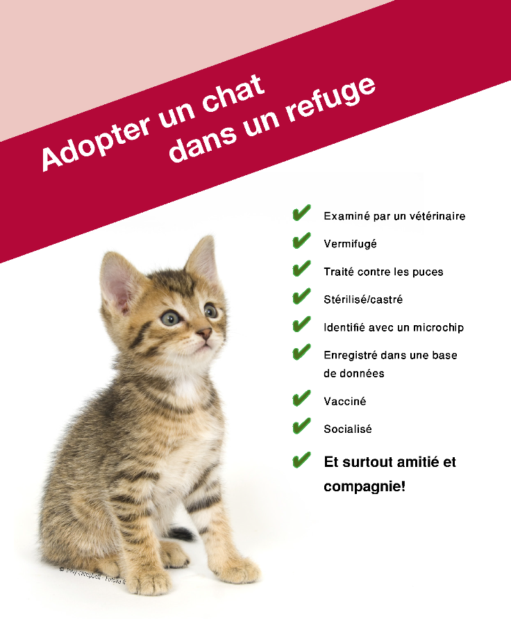 refuge chat en belgique