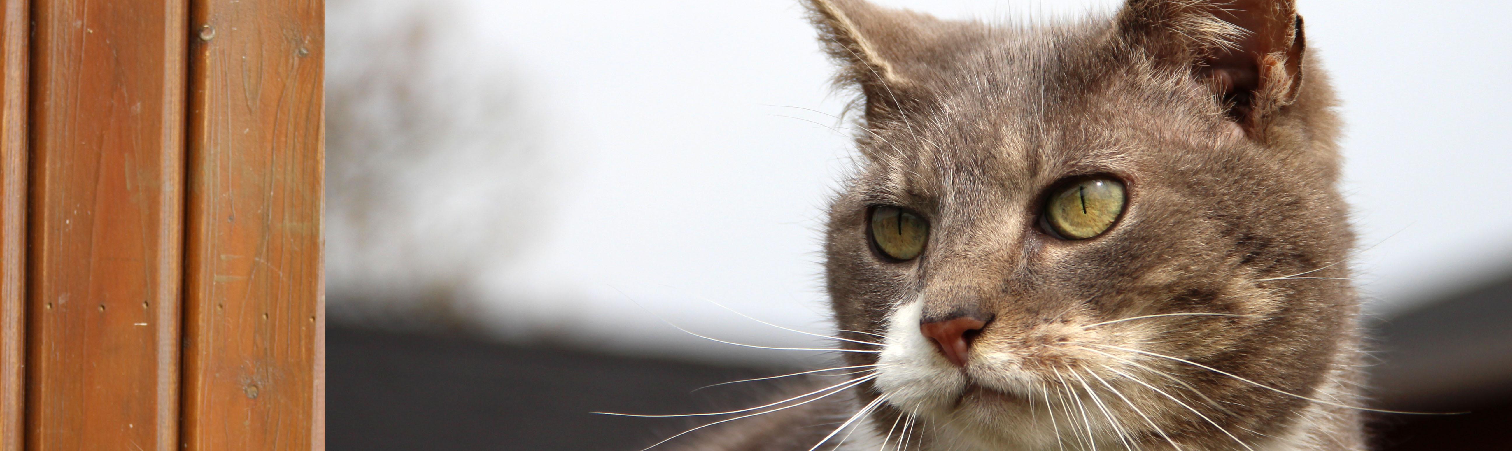refuge chat en belgique