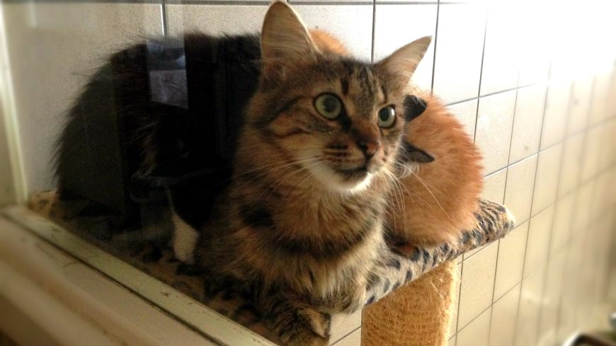 refuge chat en dordogne