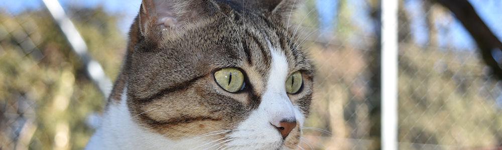 refuge chat fribourg