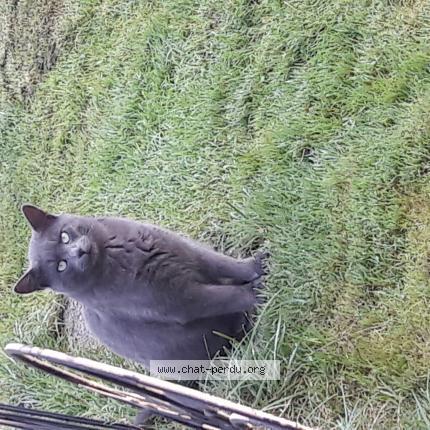 refuge chat gif sur yvette