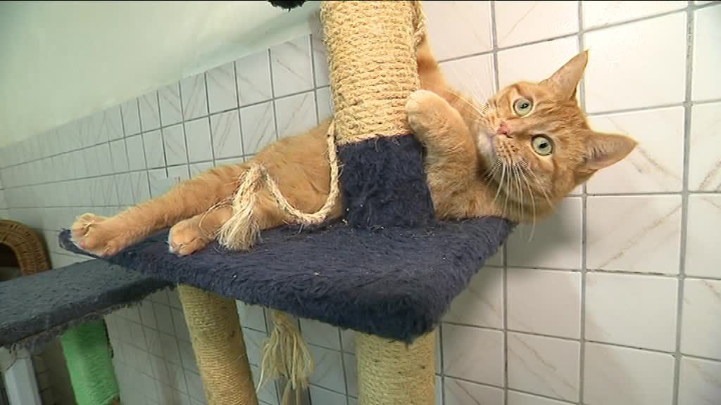 refuge chat haut rhin