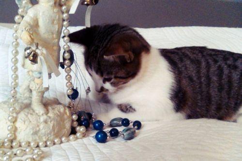 refuge chat haute vienne