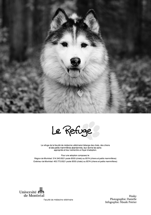 refuge chat hopital veterinaire st-hyacinthe