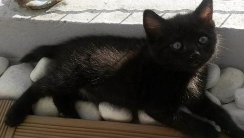 refuge chat ille et vilaine