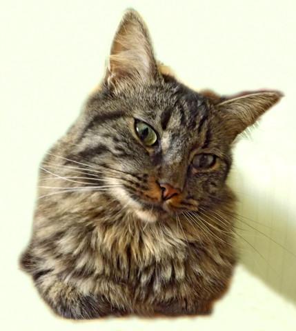 refuge chat maine et loire