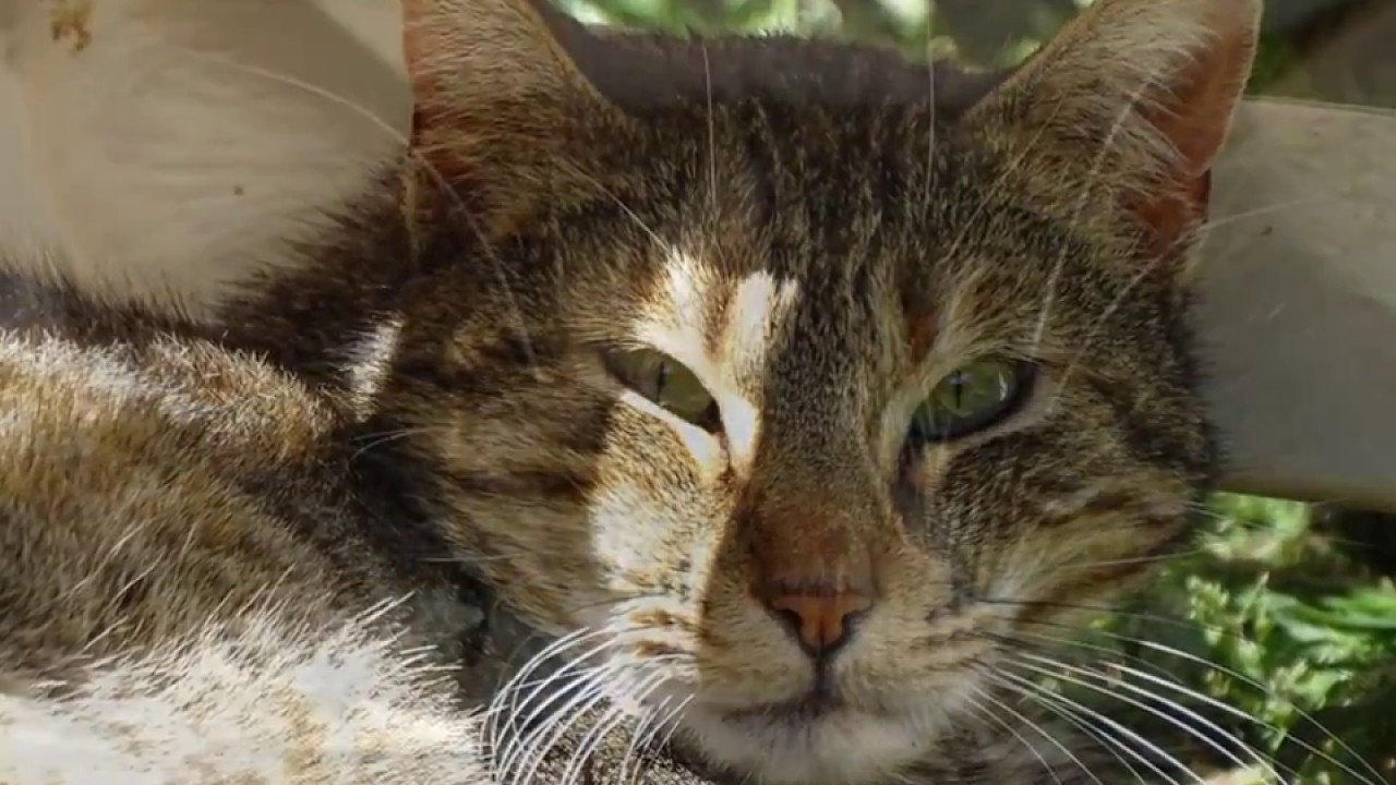 refuge chat marseille
