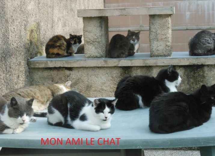 refuge chat metz
