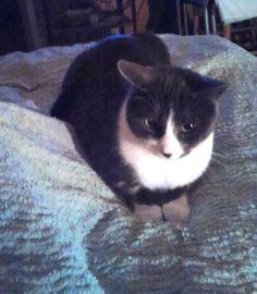 refuge chat nord pas de calais