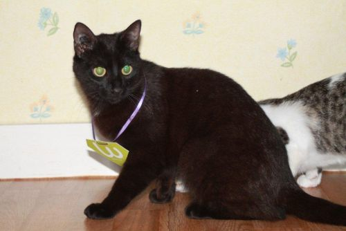 refuge chat pays de la loire