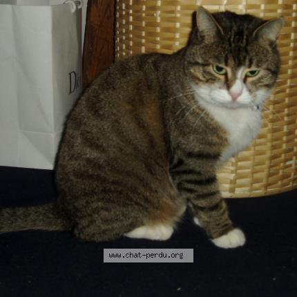 refuge chat perdu yerres