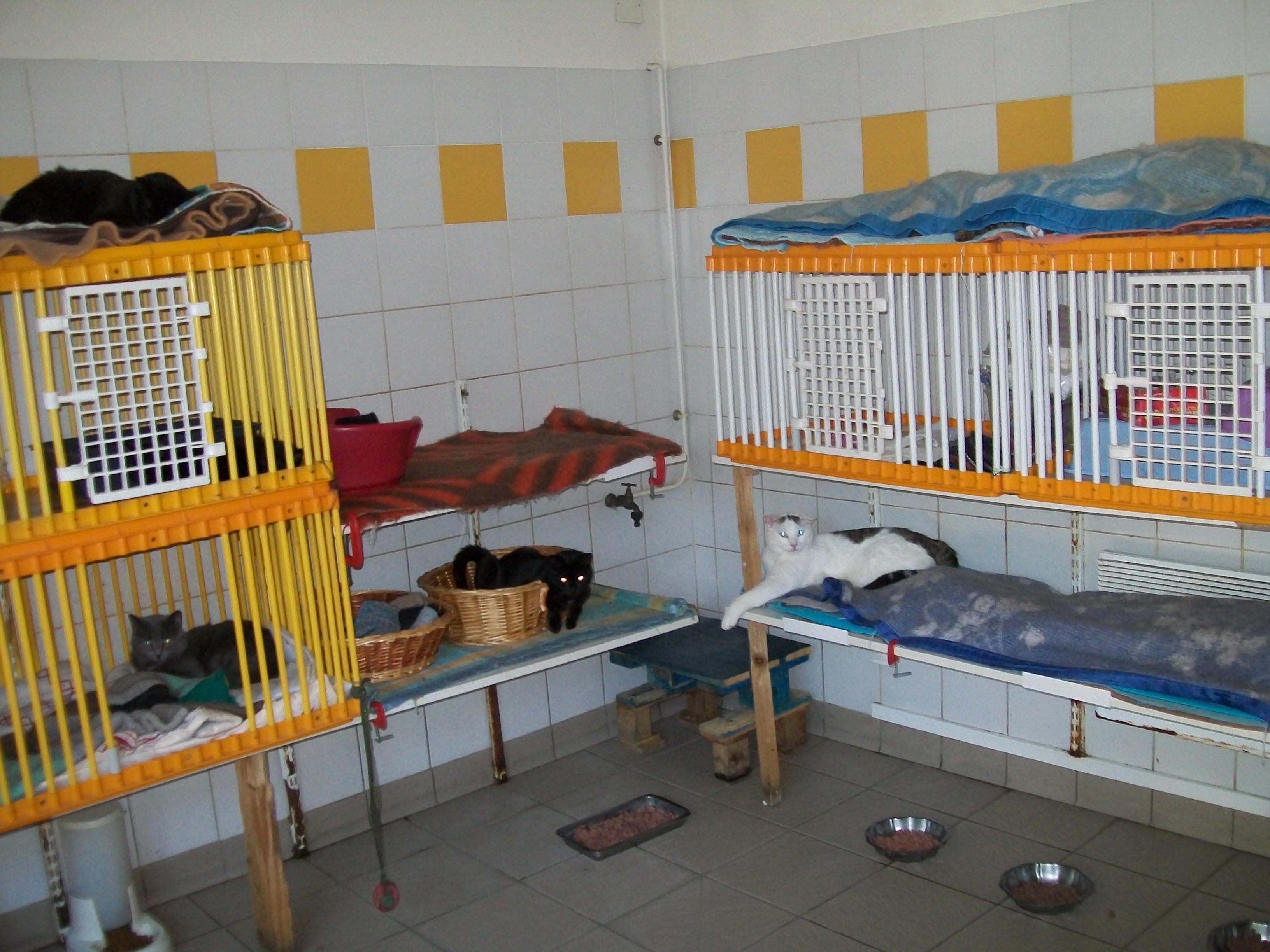 refuge chat puteaux