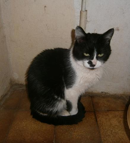 refuge chat romans sur isere
