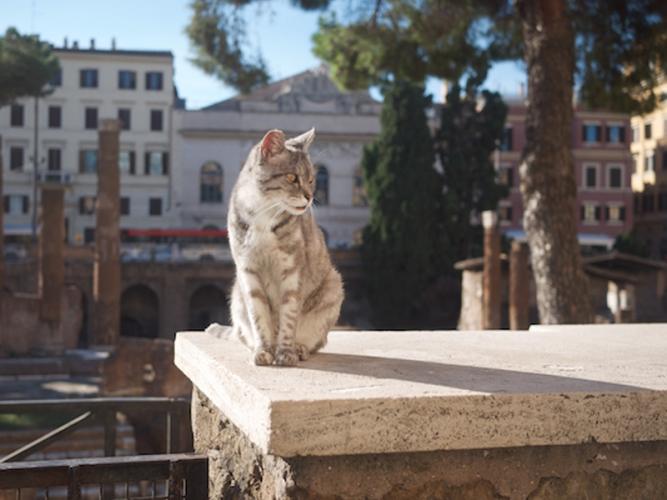 refuge chat rome