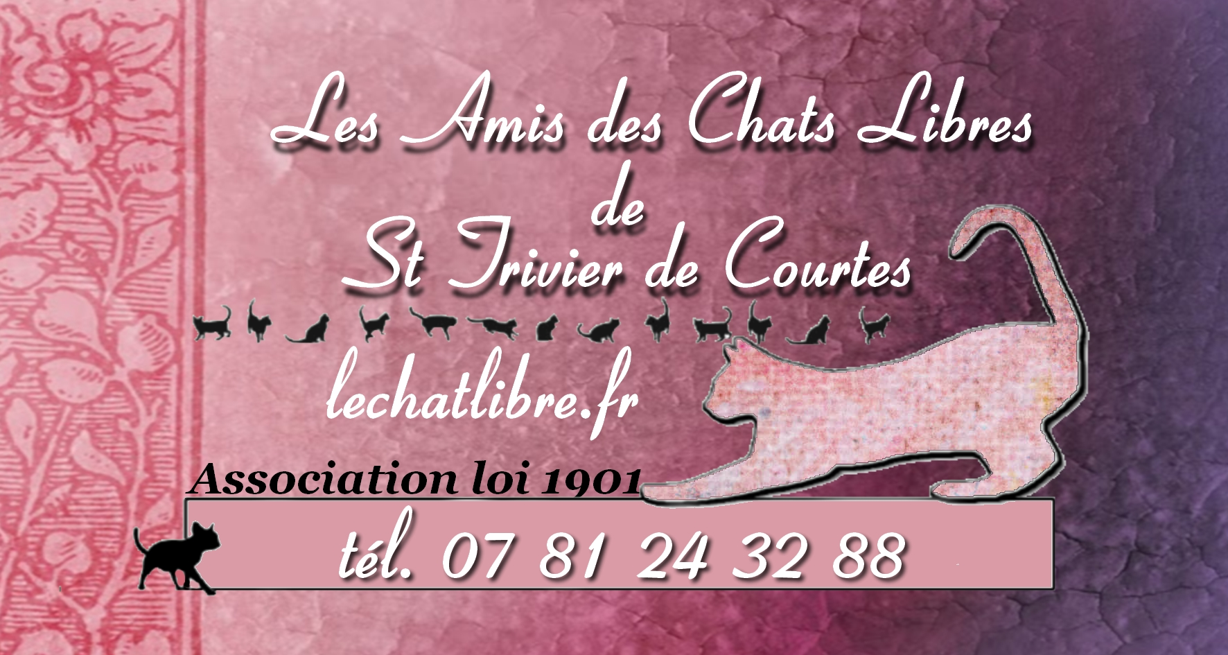 refuge chat saint trivier de courtes