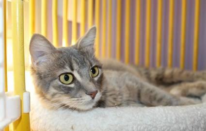 refuge chat saulx les chartreux
