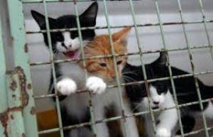 refuge chat saumur