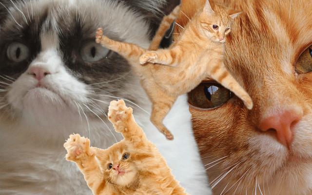 refuge chat strasbourg