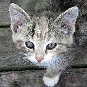 refuge chat suisse