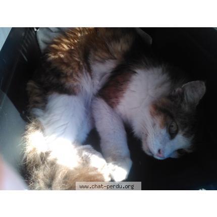 chat sans inscription rapide talence