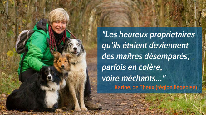 refuge chat wallonie