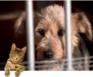 refuge chien 06130