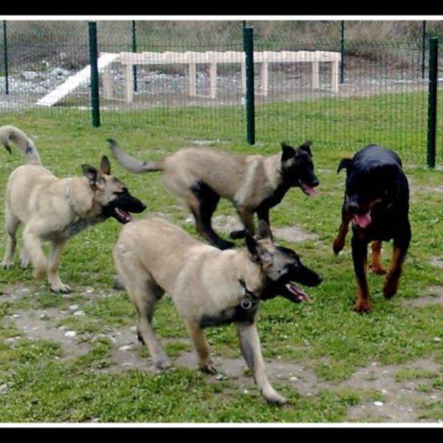refuge chien 06700