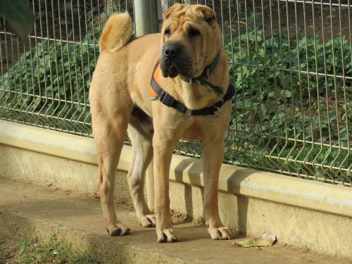 refuge chien 11