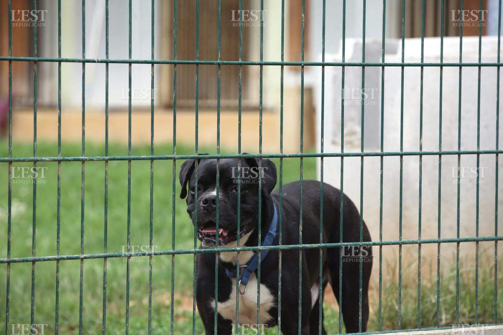 refuge chien 17