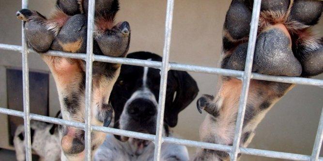 refuge chien 23