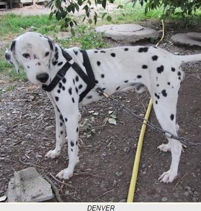refuge chien 31800