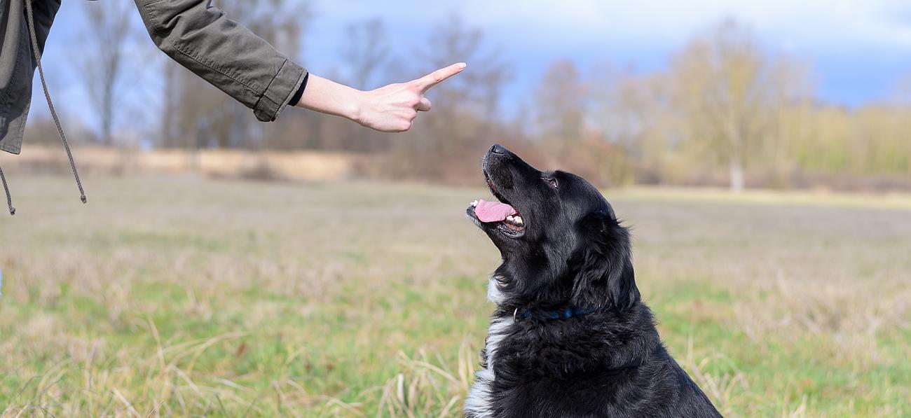 refuge chien 33240