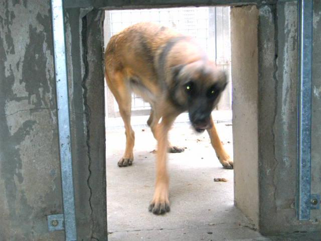 refuge chien 62