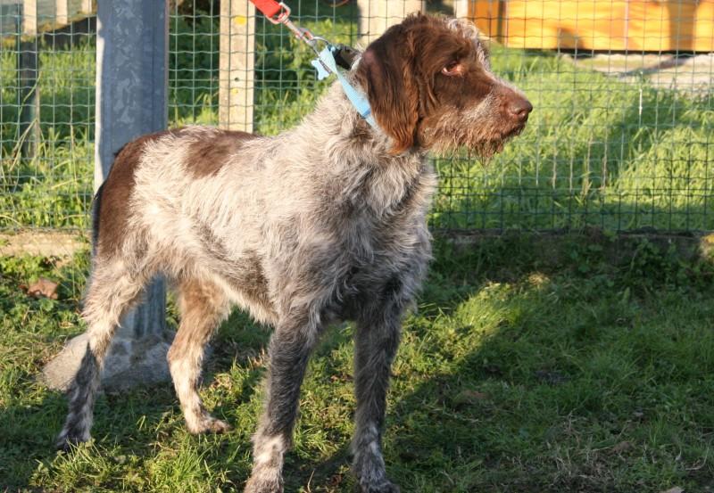 refuge chien 64160