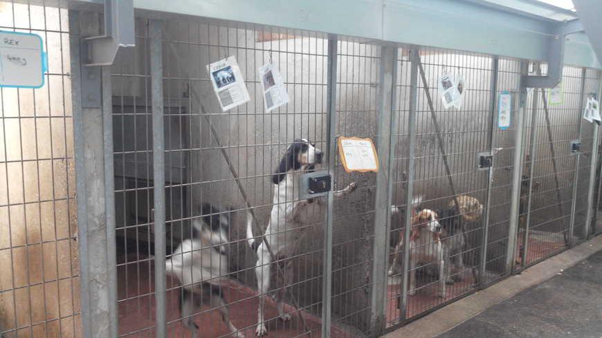 refuge chien 75