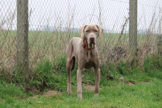 refuge chien 76