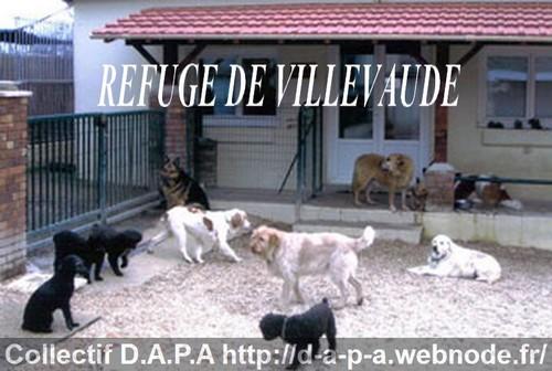 refuge chien 77 villevaude