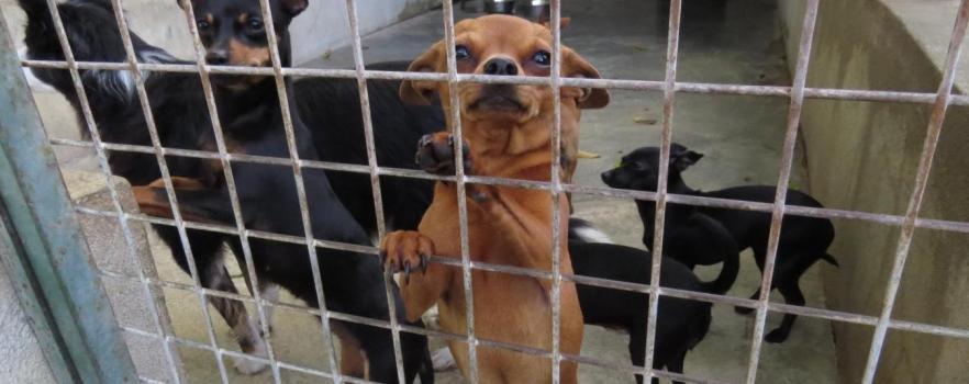 refuge chien 85