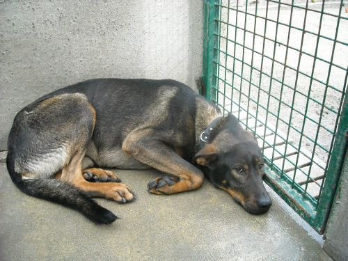 refuge chien 974