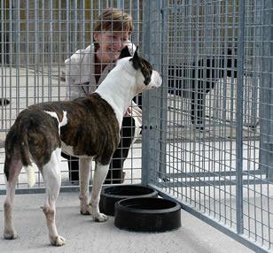 refuge chien a donner belgique