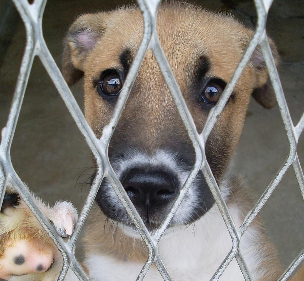 refuge chien a lyon