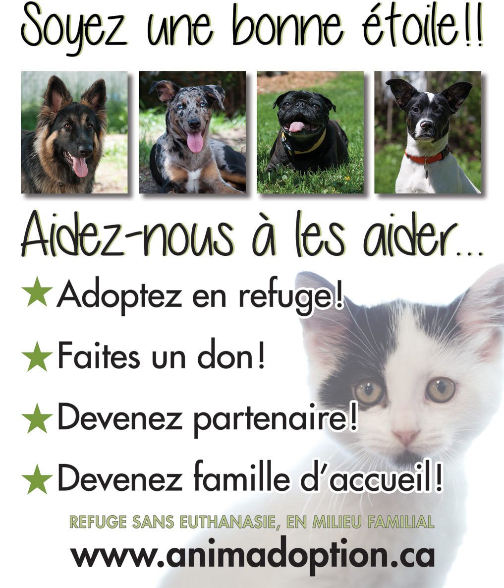 refuge chien a montreal