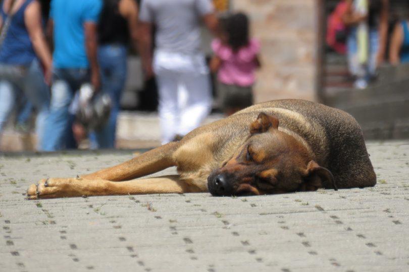 refuge chien abandonne