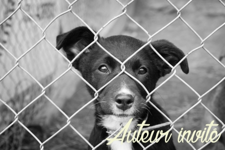 refuge chien adoption