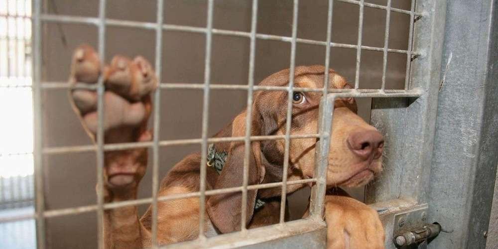 refuge chien agen