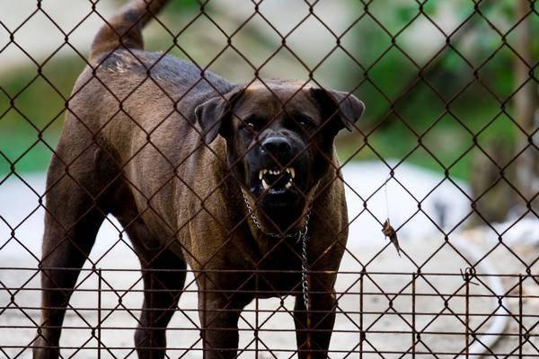 refuge chien agressif