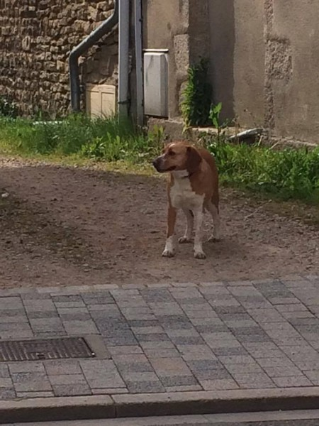refuge chien alencon