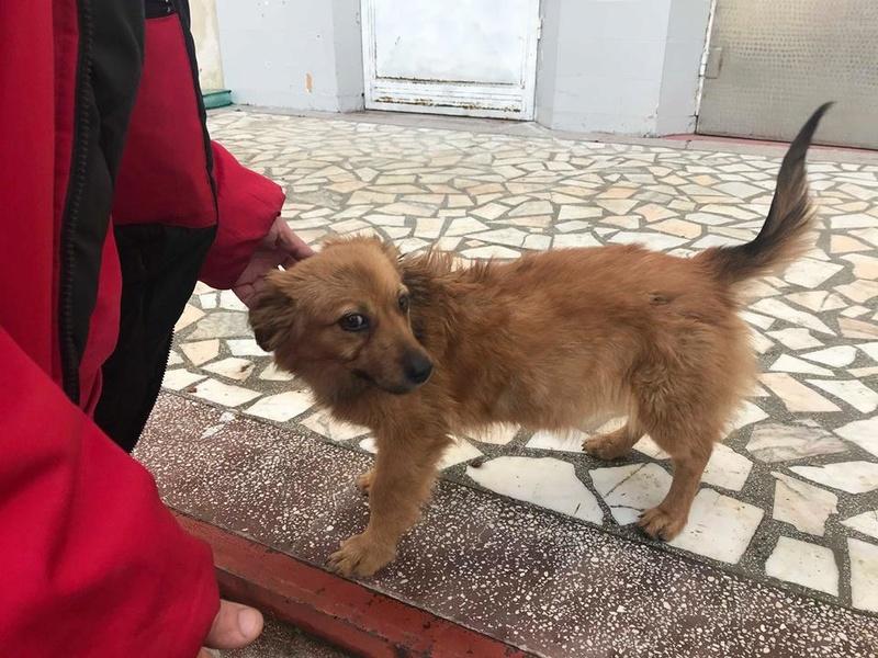 refuge chien alsace
