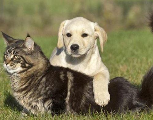 refuge chien antibes
